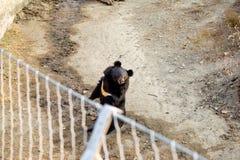 Σταθείτε την αρκούδα στοκ φωτογραφίες με δικαίωμα ελεύθερης χρήσης