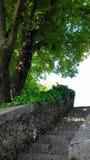 Σταθερά βήματα από το δέντρο Στοκ φωτογραφίες με δικαίωμα ελεύθερης χρήσης