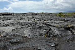 Σταθεροποιημένη ροή λάβας Pahoehoe, μεγάλο νησί της Χαβάης στοκ εικόνες