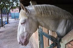 σταθερό λευκό αλόγων Στοκ φωτογραφία με δικαίωμα ελεύθερης χρήσης