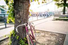Σταθερό δρόμος ποδήλατο στην οδό πόλεων κάτω από το δέντρο Στοκ φωτογραφία με δικαίωμα ελεύθερης χρήσης