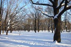 σταθμεύστε το χειμώνα Στοκ Φωτογραφίες