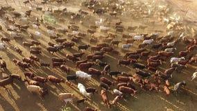 Σταθμός βοοειδών απόθεμα βίντεο