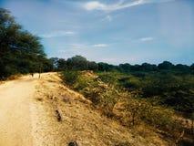 Σταθμός Hill, ταπετσαρία φύσης, λόφος με τη φύση, οι Μπους, greenarynature του s, στοκ εικόνα