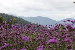 Στατικός κήπος λουλουδιών στοκ εικόνα