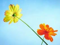 Σταυρός πέρα από το λουλούδι Στοκ Εικόνες