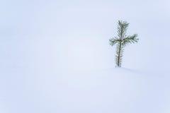 Σταυρός φύσης Στοκ Εικόνα