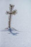 Σταυρός φύσης Στοκ εικόνα με δικαίωμα ελεύθερης χρήσης