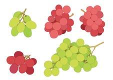 Σταφίδα σταφυλιών και φρούτα σταφίδων φρέσκα στο άσπρο υπόβαθρο ελεύθερη απεικόνιση δικαιώματος