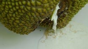 Σταφίδα φρούτων του Jack που ρέει από calyx τη μείωση στο πάτωμα κεραμιδιών απόθεμα βίντεο
