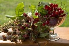 Σταφίδες και φράουλες Στοκ εικόνες με δικαίωμα ελεύθερης χρήσης