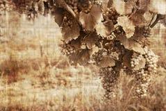 σταφύλια βρώμικα Στοκ φωτογραφία με δικαίωμα ελεύθερης χρήσης