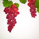Σταφύλια κρασιού με τα φύλλα ελεύθερη απεικόνιση δικαιώματος