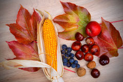 Σταφύλια, φύλλα, μήλο, corncob, κάστανο, και ξύλο καρυδιάς σε ξύλινη GR Στοκ εικόνα με δικαίωμα ελεύθερης χρήσης