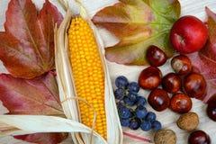 Σταφύλια, φύλλα, μήλο, corncob, κάστανο, και ξύλο καρυδιάς σε ξύλινη GR Στοκ φωτογραφίες με δικαίωμα ελεύθερης χρήσης