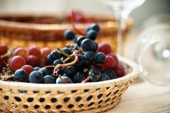 Σταφύλι στο ψάθινο καλάθι και τα κενά γυαλιά κρασιού Στοκ εικόνα με δικαίωμα ελεύθερης χρήσης