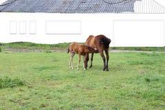 Σταύλοι σχεδίων για μια φοράδα και foal της στοκ φωτογραφία με δικαίωμα ελεύθερης χρήσης
