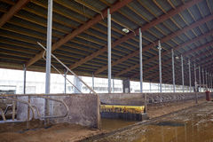 Σταύλος σταύλων στο γαλακτοκομικό αγρόκτημα στοκ φωτογραφία με δικαίωμα ελεύθερης χρήσης