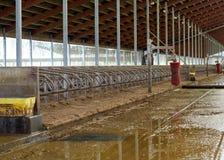 Σταύλος σταύλων στο γαλακτοκομικό αγρόκτημα στοκ εικόνες