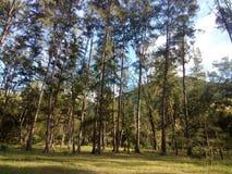 Στα δάση Στοκ Εικόνα
