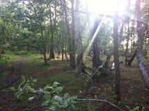 Στα δάση στοκ εικόνες με δικαίωμα ελεύθερης χρήσης