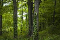 Στα δάση Στοκ Εικόνες