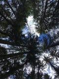 Στα δάση στοκ φωτογραφία με δικαίωμα ελεύθερης χρήσης