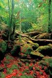 Στα ίχνη τροπικών δασών στο χρόνο ιχνών με τα όμορφα φύλλα σφενδάμου που αφορούν τους βράχους Και ξυλεία κατά μήκος ενός ίχνους π Στοκ Εικόνες