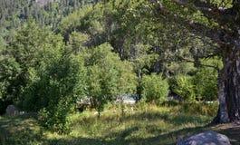 Στα βουνά του Καύκασου Στοκ φωτογραφία με δικαίωμα ελεύθερης χρήσης