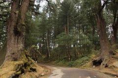 Στα δάση στοκ φωτογραφία