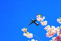 Στα πλαίσια των ανθών κερασιών στο στρατιωτικό αεροπλάνο ουρανού Στοκ φωτογραφία με δικαίωμα ελεύθερης χρήσης