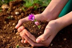 Χούφτα των οφθαλμών χώματος και λουλουδιών Στοκ φωτογραφία με δικαίωμα ελεύθερης χρήσης