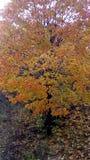 Στα χρυσά κομψά δέντρα ενδυμάτων το φθινόπωρο στοκ εικόνες με δικαίωμα ελεύθερης χρήσης