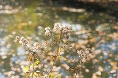 Στεγνωμένα λουλούδια φθινοπώρου Στοκ φωτογραφίες με δικαίωμα ελεύθερης χρήσης