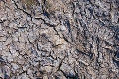 Στεγνωμένη επιφάνεια λάσπης Στοκ φωτογραφία με δικαίωμα ελεύθερης χρήσης