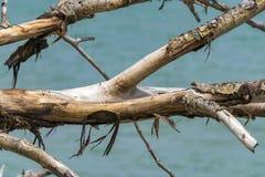 Στεγνωμένο δέντρο Στοκ φωτογραφίες με δικαίωμα ελεύθερης χρήσης