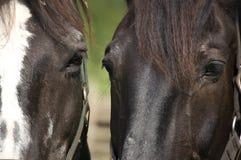 στενά άλογα δύο επάνω Στοκ εικόνα με δικαίωμα ελεύθερης χρήσης