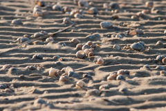 στενά θαλασσινά κοχύλια άμμου επάνω Στοκ Εικόνες