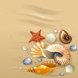 στενά θαλασσινά κοχύλια άμμου επάνω ελεύθερη απεικόνιση δικαιώματος