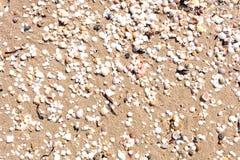 στενά θαλασσινά κοχύλια άμμου επάνω Στοκ φωτογραφία με δικαίωμα ελεύθερης χρήσης