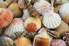 στενά θαλασσινά κοχύλια θαλασσινών κοχυλιών συλλογής ανασκόπησης επάνω στοκ φωτογραφίες