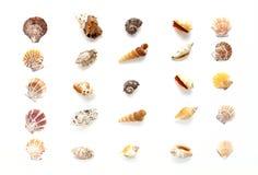 στενά θαλασσινά κοχύλια θαλασσινών κοχυλιών συλλογής ανασκόπησης επάνω Στοκ Φωτογραφία