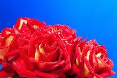 στενά κόκκινα τριαντάφυλλα ανθοδεσμών επάνω Στοκ Εικόνες