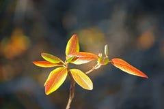 Στενά στενόμακρα χρωματισμένα φύλλα φθινοπώρου Στοκ φωτογραφία με δικαίωμα ελεύθερης χρήσης