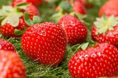 στενές φράουλες επάνω στοκ εικόνες