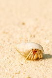 Στενή άποψη του καβουριού με το κοχύλι στην αμμώδη παραλία στις Μαλβίδες Στοκ φωτογραφίες με δικαίωμα ελεύθερης χρήσης
