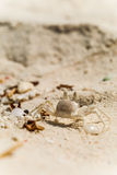 Στενή άποψη του καβουριού στην αμμώδη παραλία στις Μαλβίδες Στοκ Φωτογραφία
