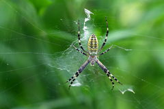 στενή αράχνη επάνω Στοκ φωτογραφία με δικαίωμα ελεύθερης χρήσης