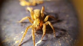 στενή αράχνη επάνω Στοκ Εικόνα