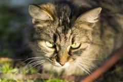 Στενή γάτα Στοκ φωτογραφία με δικαίωμα ελεύθερης χρήσης